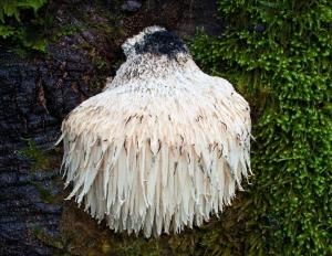 LM Mushroom